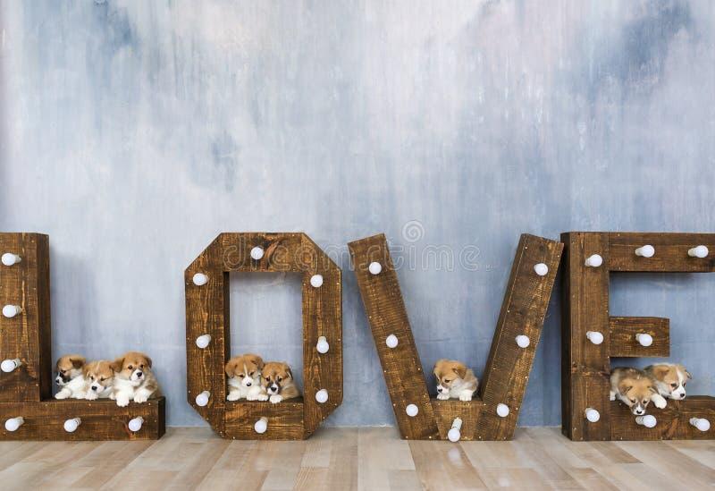 I cuccioli adorabili in studio contro lo sfondo della parola amano Festa della sorgente 8 marzo fotografia stock