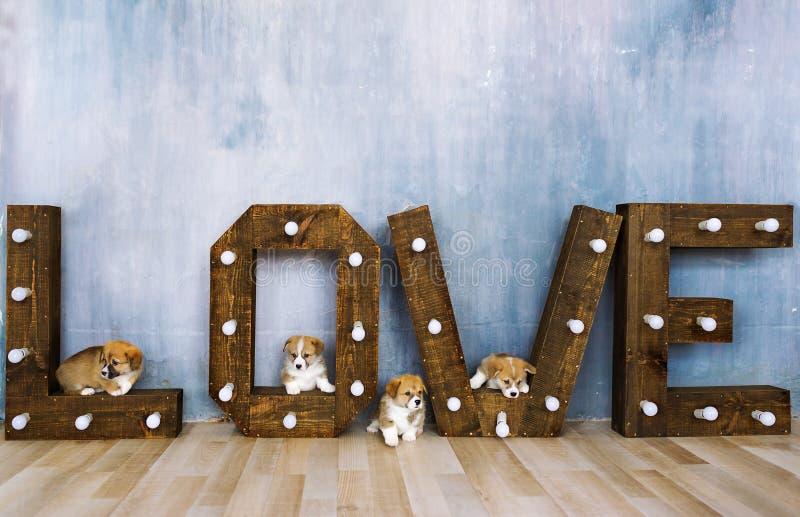 I cuccioli adorabili in studio contro lo sfondo della parola amano Festa della sorgente 8 marzo immagini stock libere da diritti