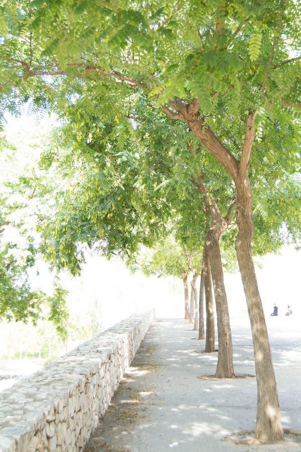 I dag önskar jag att gå under träden royaltyfria bilder