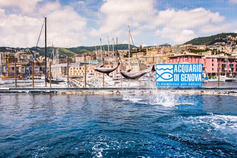 I delfini che saltano nel più grande acquario in Europa fotografie stock