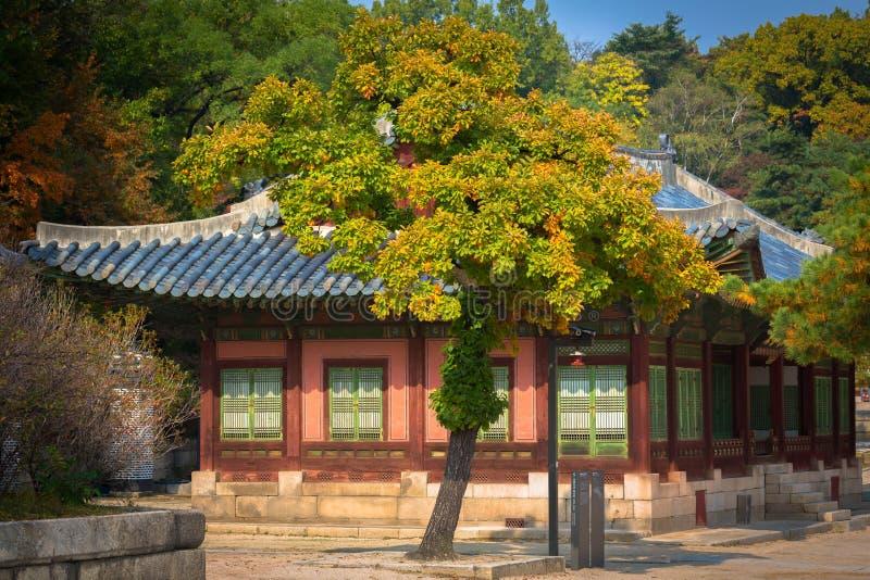 I den Changgyeonggung slotten Seoul royaltyfri foto