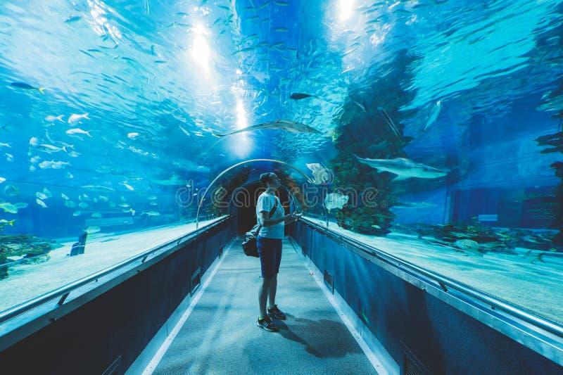I det Budapesti akvariet royaltyfri bild