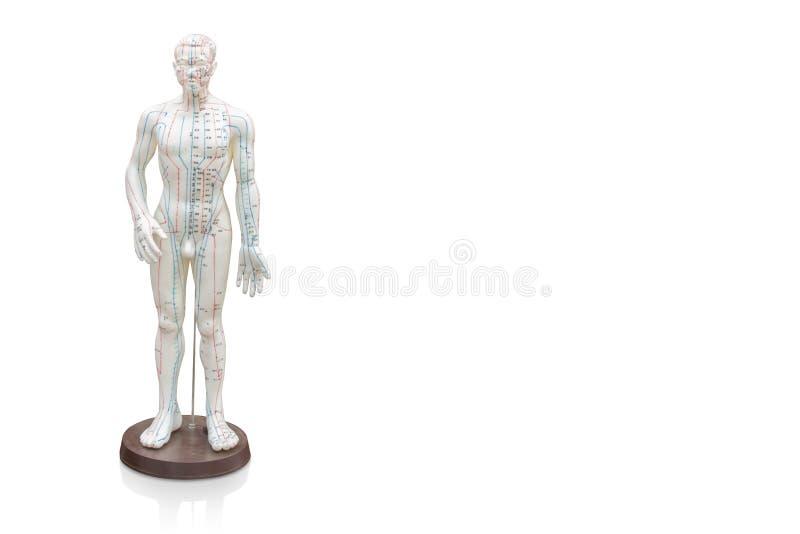 I Di hanno tagliato il modello di agopuntura dell'uomo su fondo bianco, oggetto, stazione termale della copia fotografia stock libera da diritti