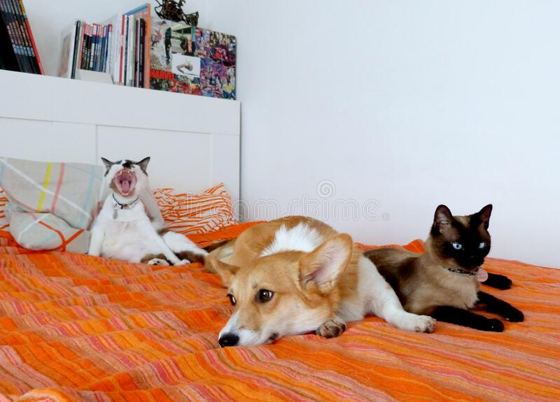 I Don't Even Have Room On My Bed Anymore... Free Public Domain Cc0 Image