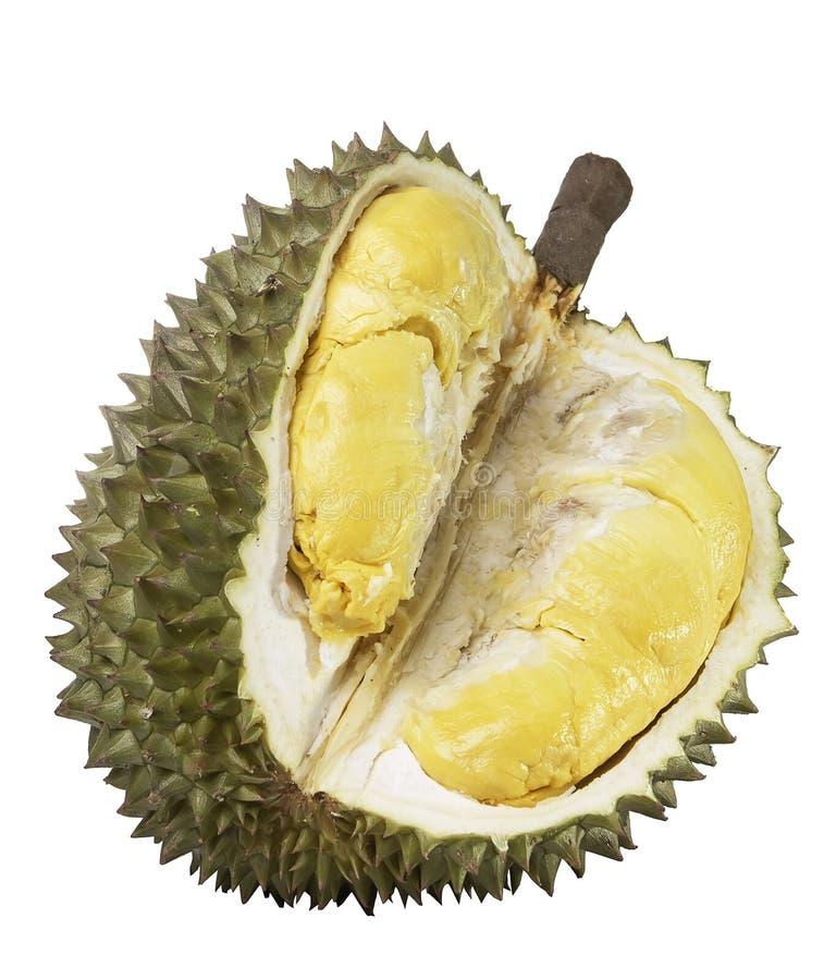I Durians hanno tagliato da parte a parte per vedere la carne gialla Sul blackground bianco fotografia stock