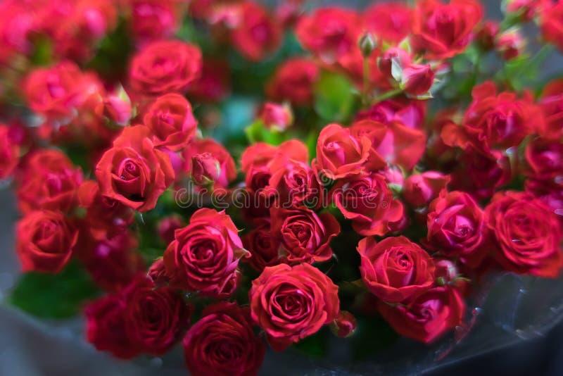 I en enorm bukett mycket röda rosor royaltyfri fotografi