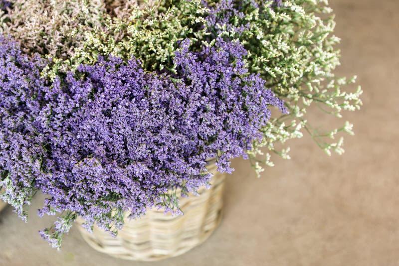I en limoniumgmelinii för vide- korg shoppar staticen eller blommor för havslavendel i lavendel-blått och vita färger i trädgårde royaltyfri fotografi