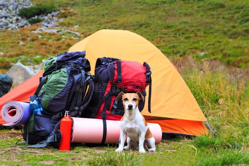 I en vandring med hunden Riktig vän Frestande kvinnor med Knout sammanträde royaltyfri fotografi
