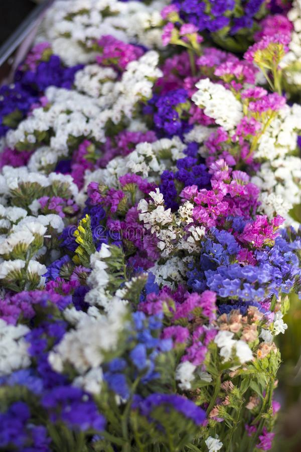 I en variation för vide- korg av limoniumsinuatum- eller staticesalem blommor i rosa, lila violetta färger i trädgård shoppa arkivbilder