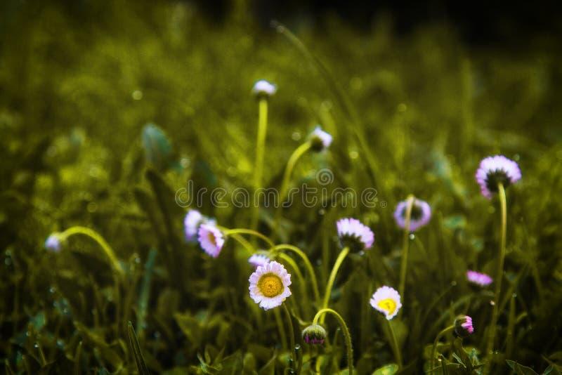 I fiori fotografia stock