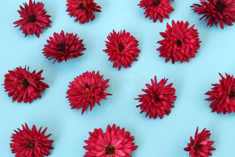 I fiori del crisantemo sono messi sulla superficie blu fotografie stock libere da diritti
