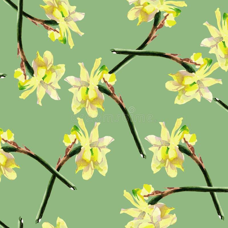 I fiori del narciso, acquerello, modellano senza cuciture illustrazione di stock