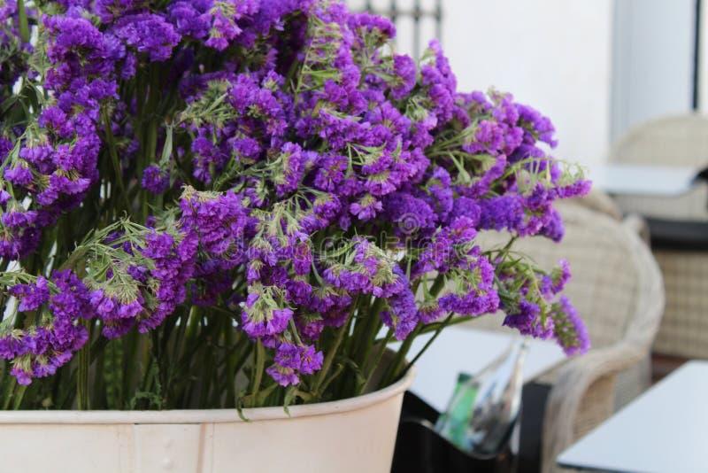 I fiori di porpora fotografie stock