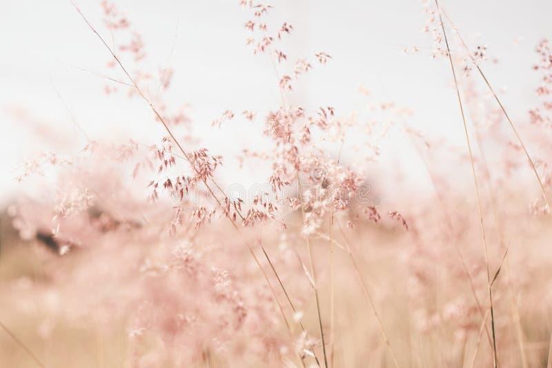 I fiori erba il fondo vago fotografia stock libera da diritti