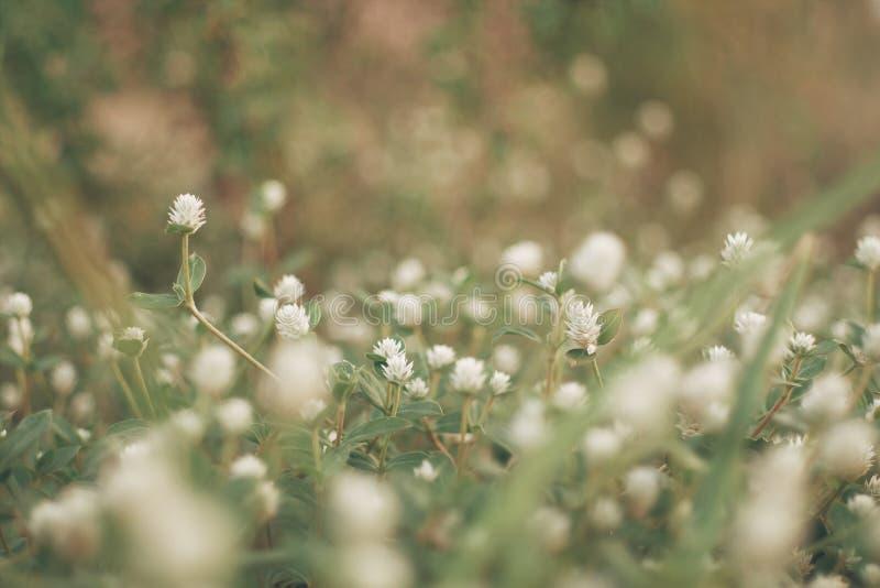 I fiori erba il fondo vago del bokeh fotografie stock libere da diritti