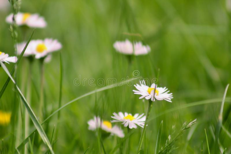 I fiori espongono al sole ed erba verde immagini stock libere da diritti