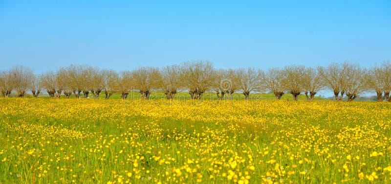 I fiori gialli variopinti e le piante della molla abbelliscono e cielo blu vicino a Parma in Italia immagini stock