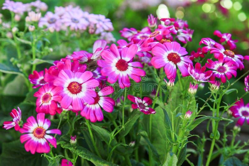 I fiori hanno i petali porpora e gambi verdi immagine stock libera da diritti