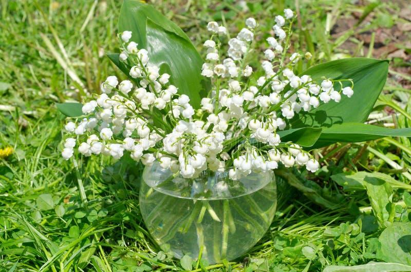I fiori possono mughetti immagini stock