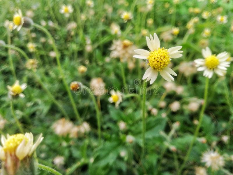 i fiori selvaggi con i precedenti del bokeh fotografia stock