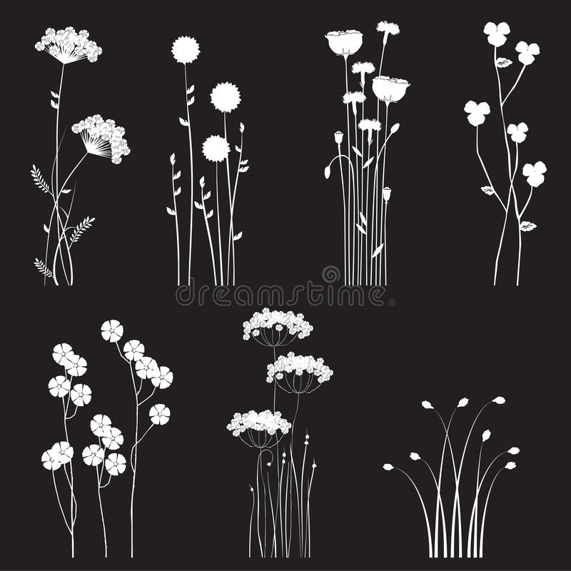 I fiori selvaggi di fioritura hanno separato su un fondo nero illustrazione di stock