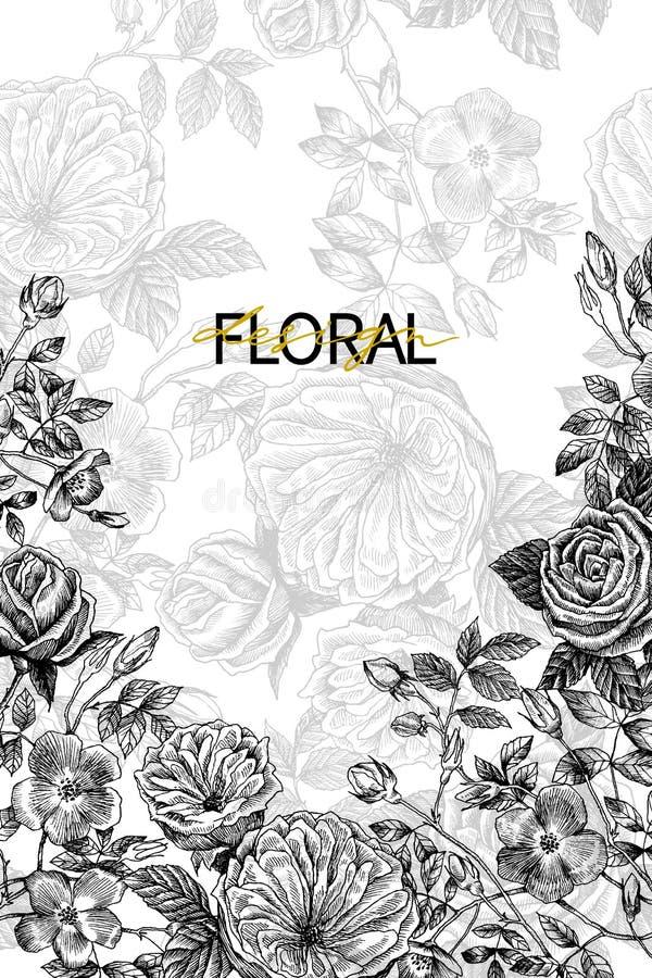 I fiori selvaggi sbocciano confine del ramo con il modello senza cuciture Illustrazione disegnata a mano botanica d'annata Primav illustrazione vettoriale