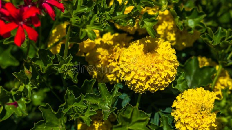 I fiori si sviluppano in un letto nel giardino sull'azienda agricola fotografia stock