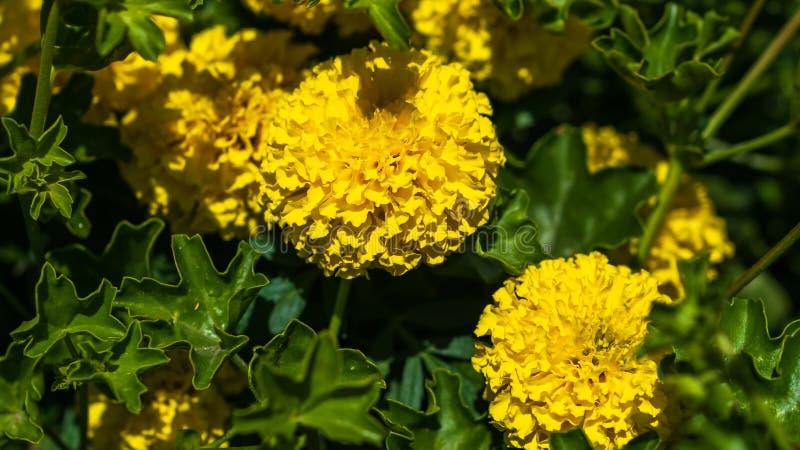 I fiori si sviluppano in un letto nel giardino sull'azienda agricola fotografie stock libere da diritti