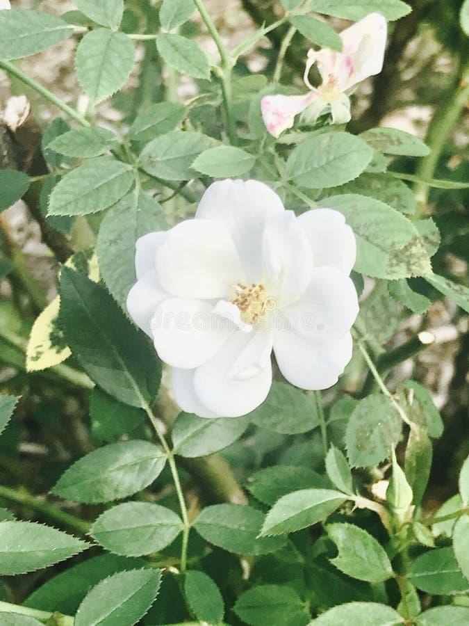 i fiori sono bei fotografia stock