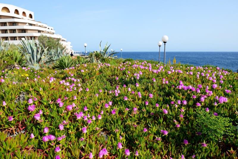 I fiori sono spiaggia vicina fotografia stock libera da diritti