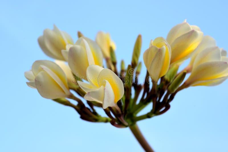 I fiori stanno fiorendo e le api fotografie stock