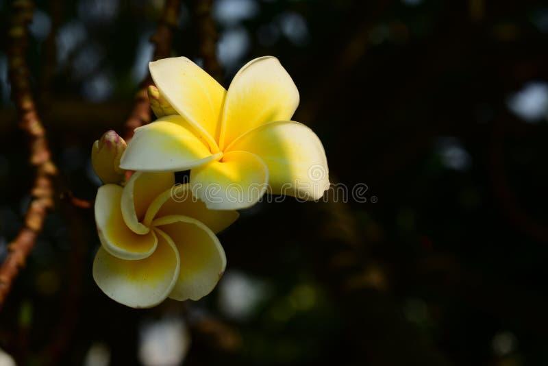 I fiori stanno fiorendo e le api immagine stock