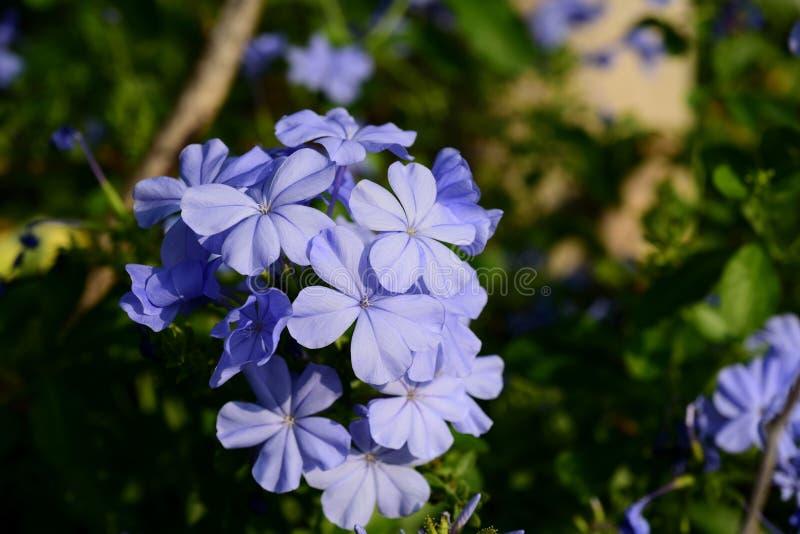 I fiori stanno fiorendo e le api fotografie stock libere da diritti