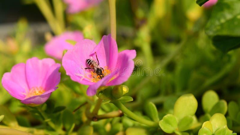 I fiori stanno fiorendo e le api immagini stock