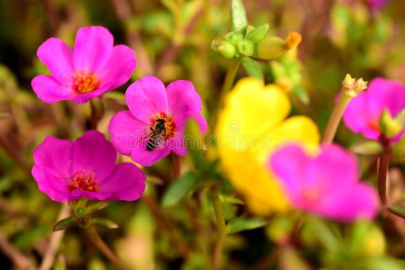 I fiori stanno fiorendo e le api fotografia stock