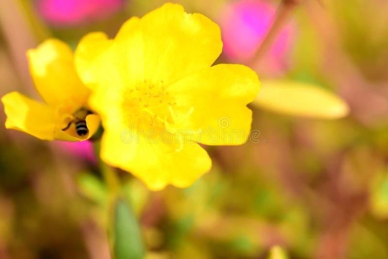 I fiori stanno fiorendo e le api fotografia stock libera da diritti