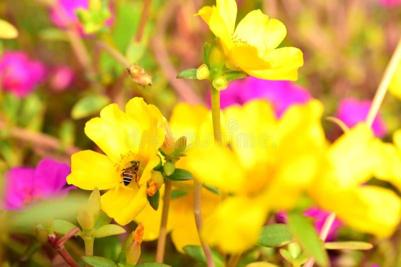 I fiori stanno fiorendo e le api immagini stock libere da diritti