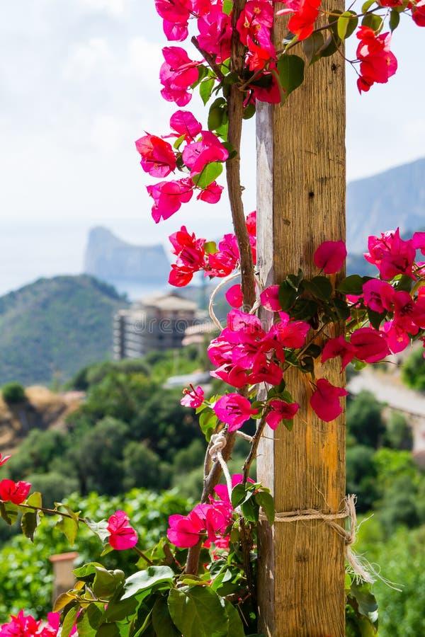 I fiori sul terrazzo immagine stock. Immagine di vivere - 68149761