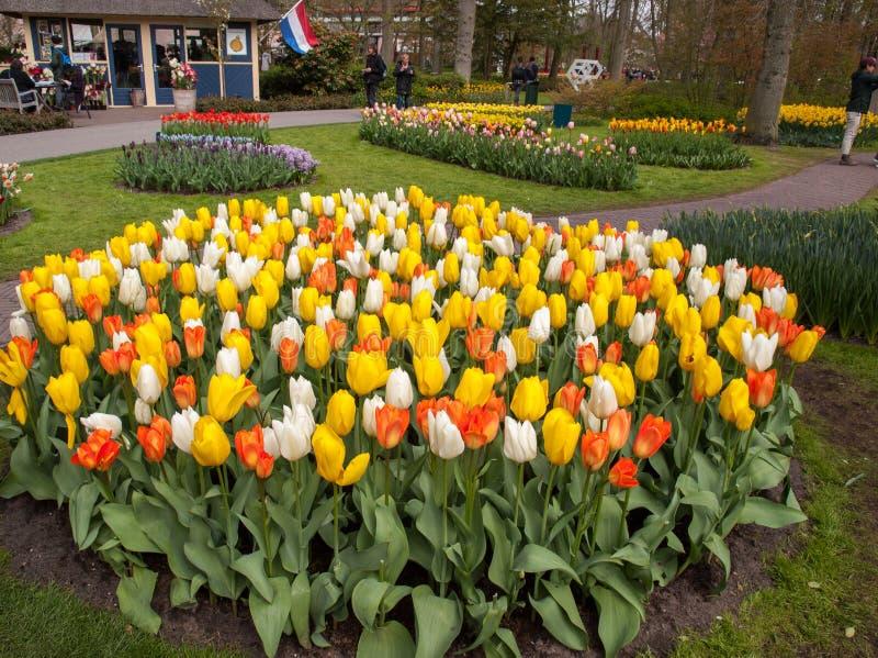 I fiori variopinti nel Keukenhof fanno il giardinaggio in Lisse, Olanda, Paesi Bassi fotografie stock libere da diritti