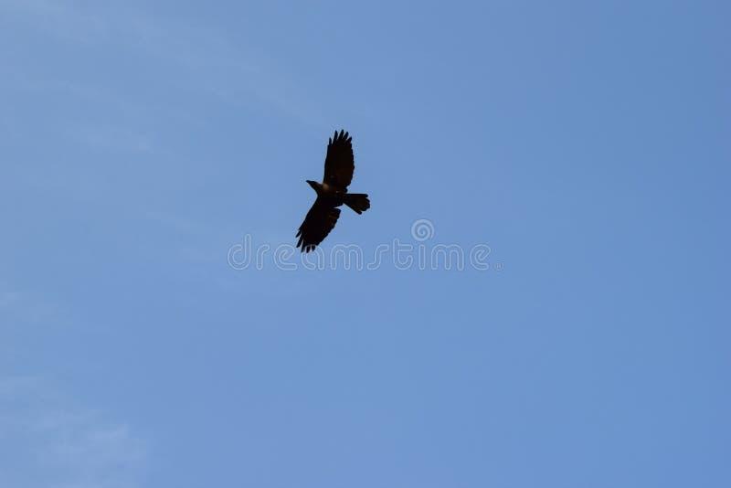 I fly where eagle cry royalty free stock photography