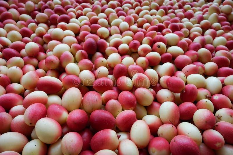 I frutti del ` del ` del ` fresco di Karanda o di Carunda del ` hanno molta vitamina C ed hanno proprietà come erba immagine stock libera da diritti