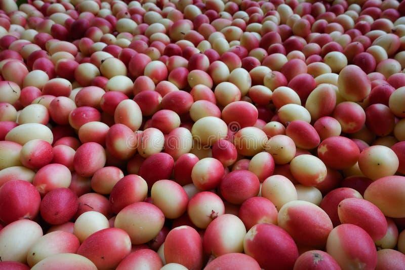 I frutti del ` del ` del ` fresco di Karanda o di Carunda del ` hanno molta vitamina C ed hanno proprietà come erba fotografia stock