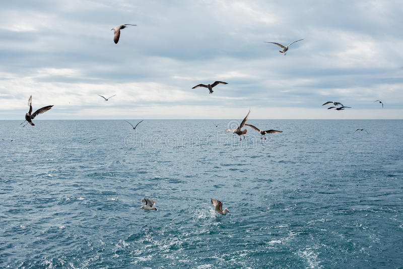 I gabbiani sorvolano il mare immagini stock