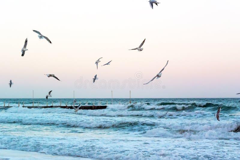 I gabbiani sorvolano le onde del mare vicino al pilastro la vigilia della tempesta uguagliante immagine stock