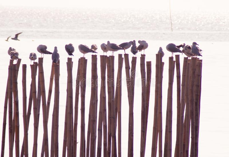 I gabbiani stanno sul ruolo dei bastoni di legno sistemati sulla riva con il bello fondo del mare immagini stock