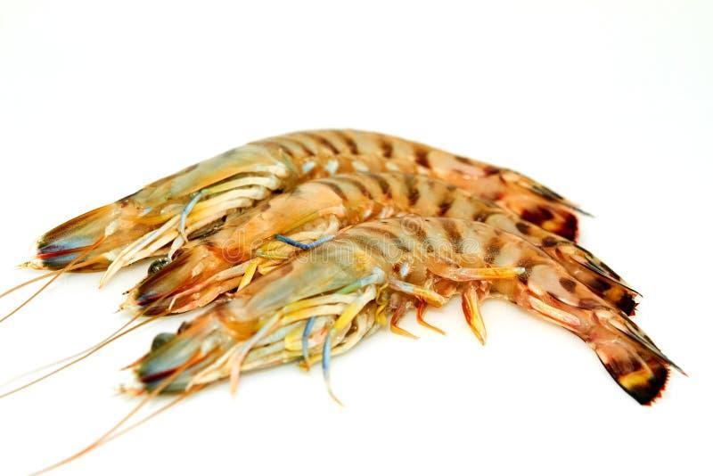 I gamberetti crudi della tigre hanno isolato fotografie stock