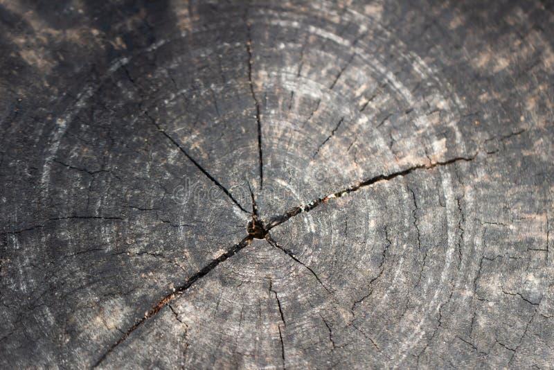 I gambi centrali dell'albero sono separati Sfondo naturale carta da parati del fondo di struttura fotografia stock