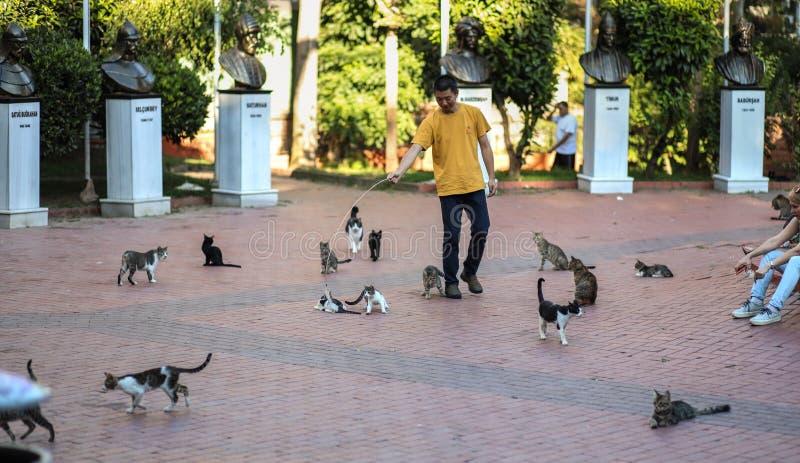 I gatti di Costantinopoli parcheggiano, la gente giocano con i gatti della via, la nuova foto 2018 fotografia stock