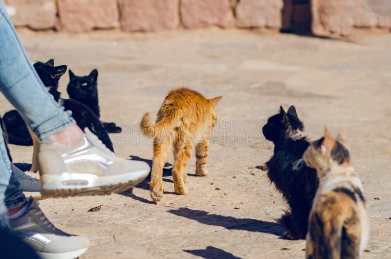I gatti smarriti sporchi chiedono alimento su una via della città fotografia stock