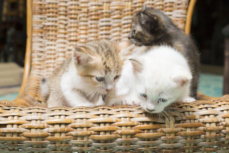 I gattini sulla sedia trovano il modo scolarsi il pavimento immagini stock libere da diritti